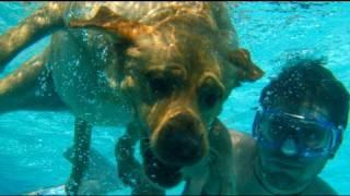 Dog Swimming Underwater! (6.11.09 - Day 42)