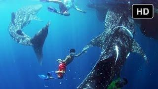 Swimming With Whale Sharks - Behind The Scenes Of Journey To The South Pacific - IMAX® 3D Film