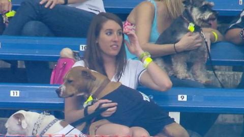 CWS@TB: Pups enjoy the Rays game during Dog Day