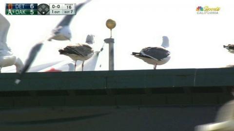 DET@OAK: Birds swarm the field at Oakland Coliseum