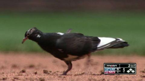 LAD@WSH: Murphy makes friends with a bird at first