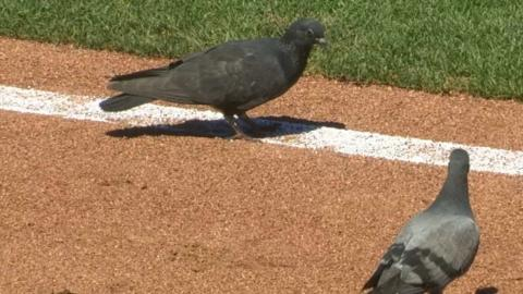 ARI@SF: Birds take in the game at AT&T Park