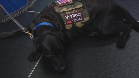 America's VetDogs join the intermission report in Brooklyn